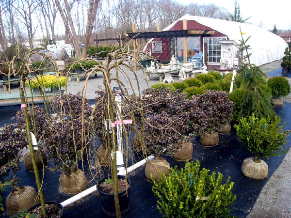 Garden Lovers Paradise At Little Tree Nursery Attleboro Ma Patch