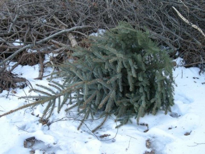 when does west des moines free christmas tree pick up end - When Does Christmas End