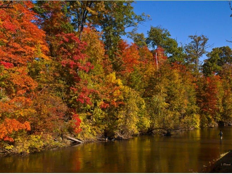peak fall colors michigan 2020