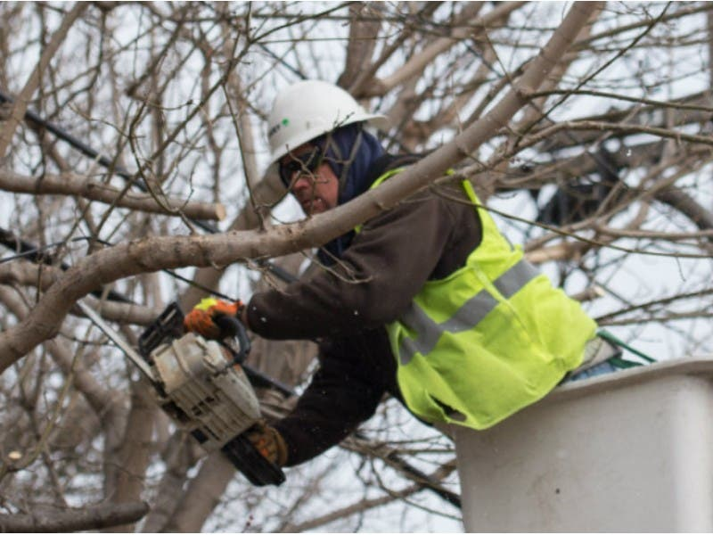 Utilities Aggressively Cutting Trees To Curb Outages