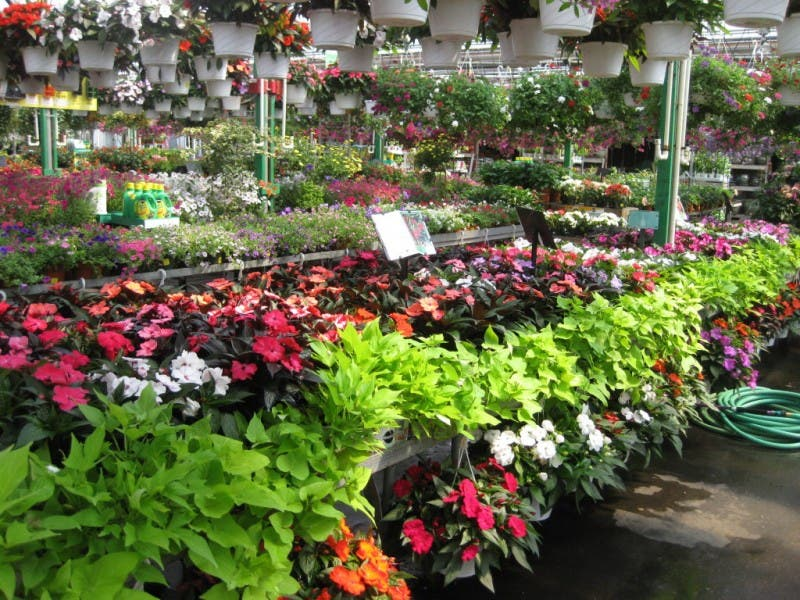 Dees Nursery Florist Annual 4th Of July