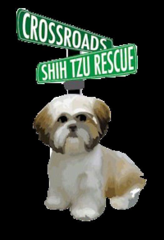 Crossroads Shih Tzu Rescue Adoption Day | New Lenox, IL Patch