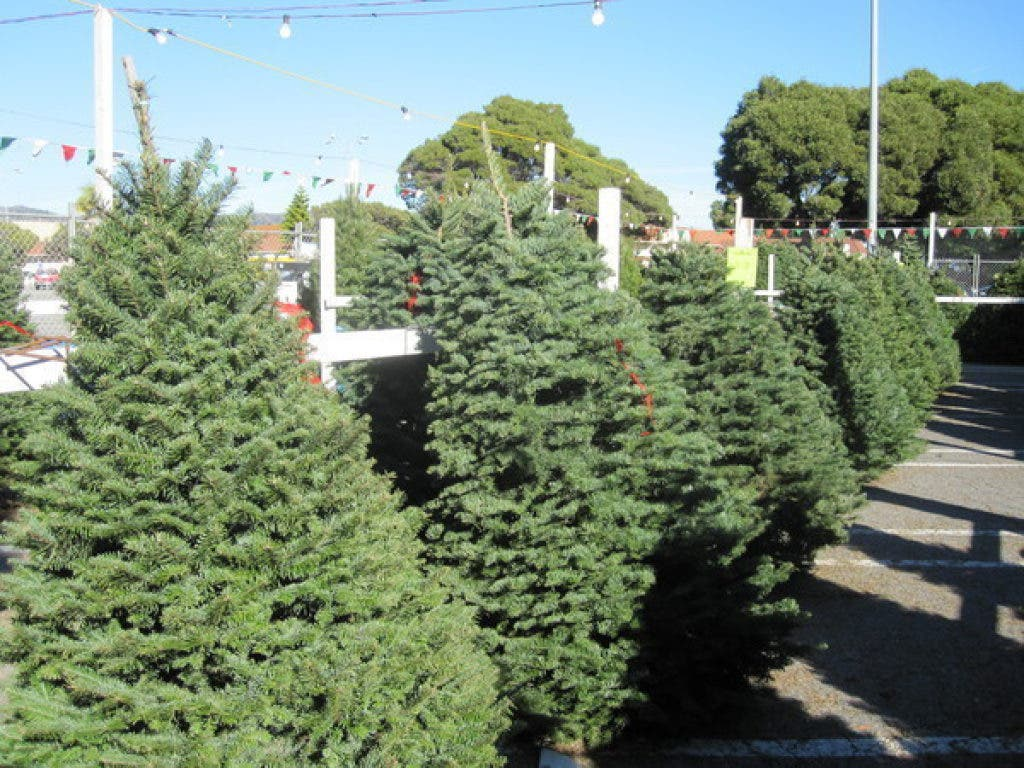 free christmas trees for low income families in los angeles