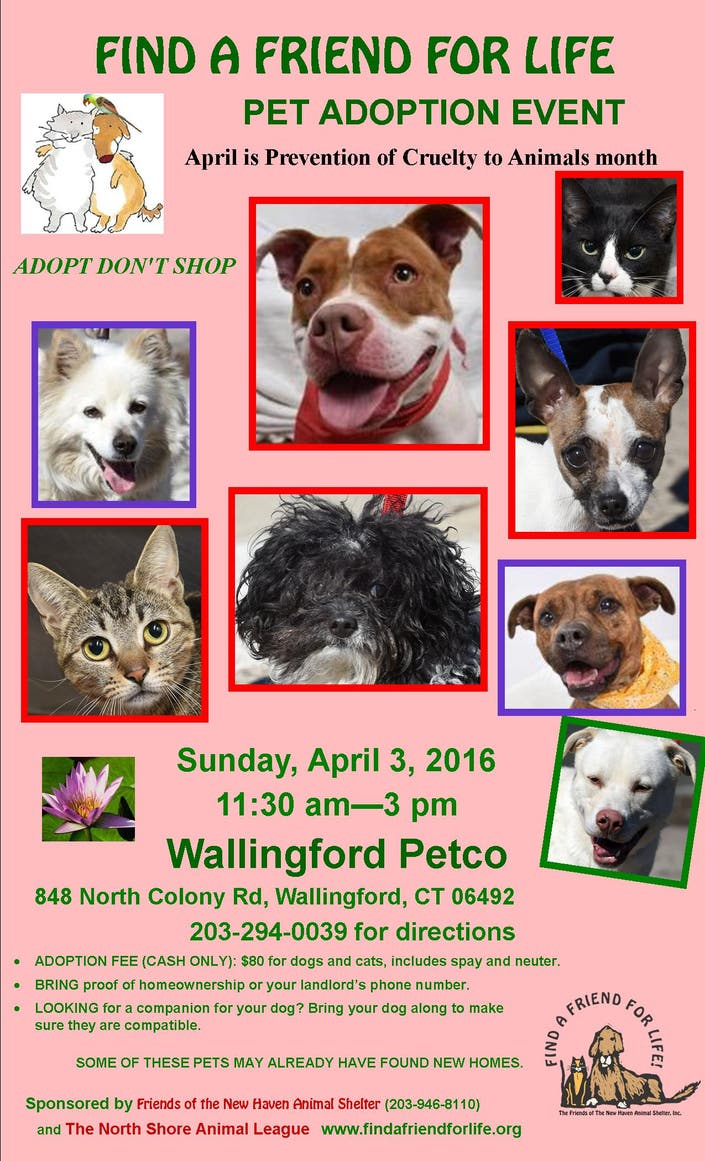 New Haven Animal Shelter Adoption Event | Hamden, CT Patch