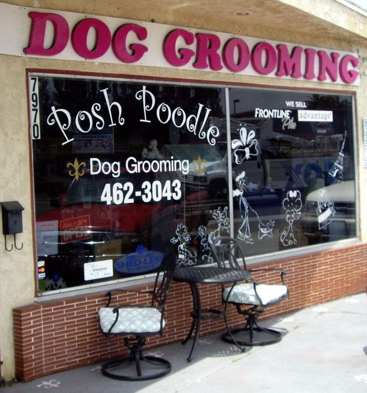 Posh Poodle Dog Grooming A Popular Pampered Pet Palace Lemon