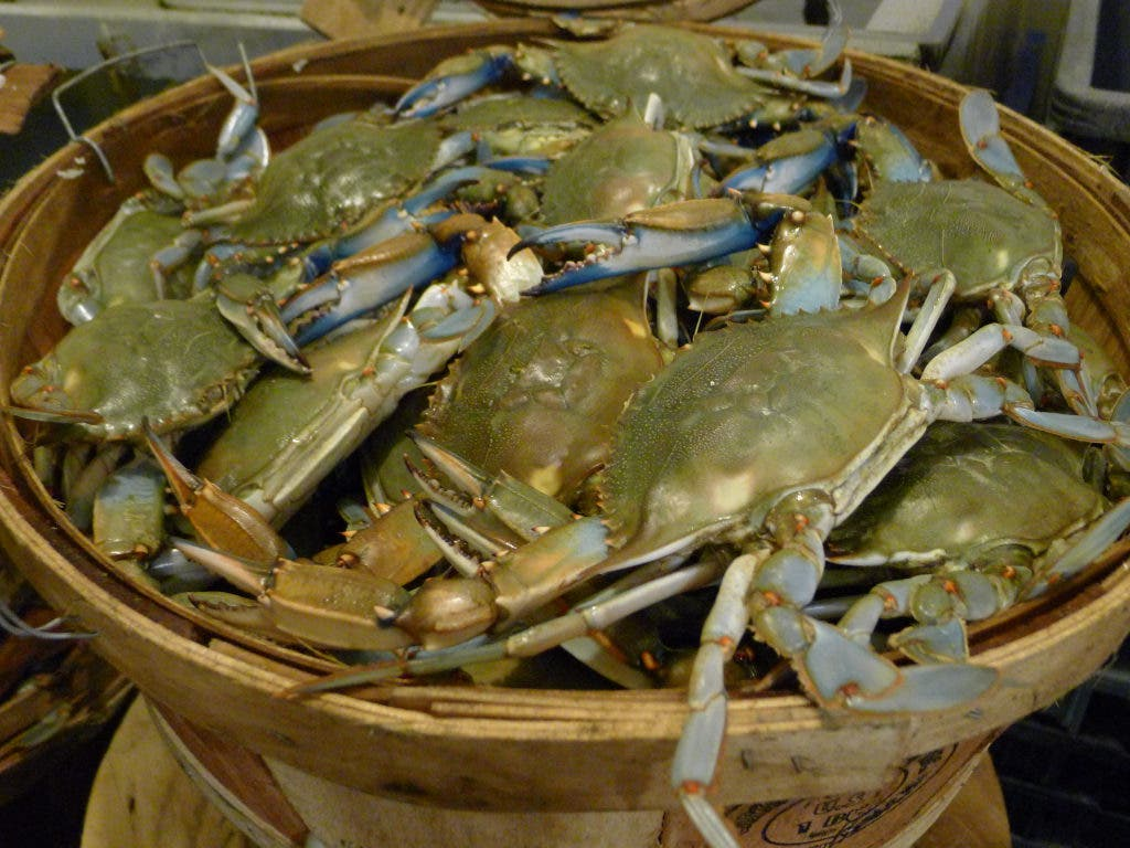 Your Guide to Buying Local Crabs in Annapolis | Annapolis