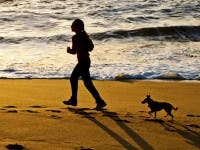What Beaches In California Allow Dogs