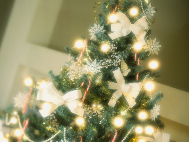 best places to buy a christmas tree - Best Place To Buy A Christmas Tree