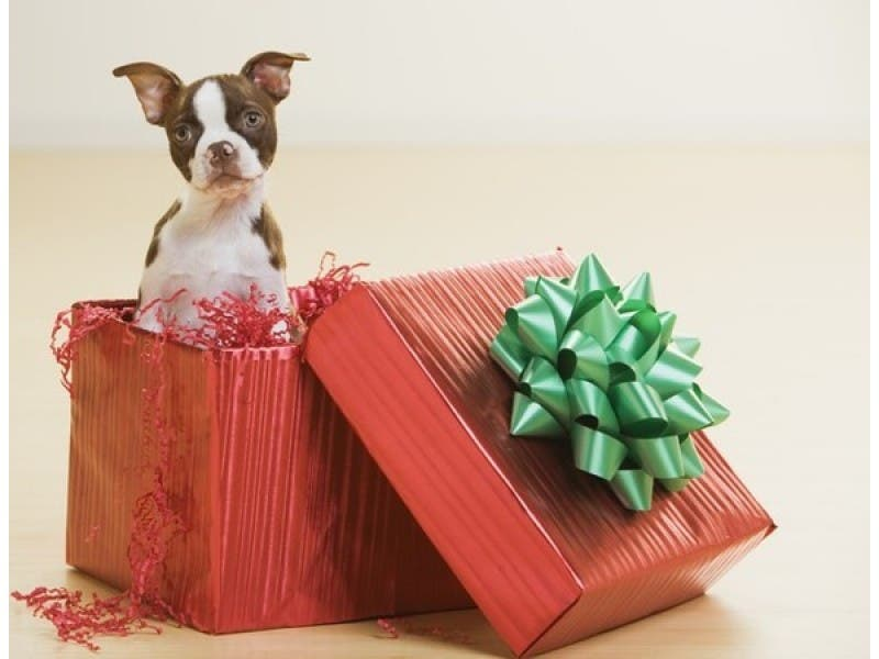 purrfect christmas presents for cats and dogs - Christmas Presents For Dogs