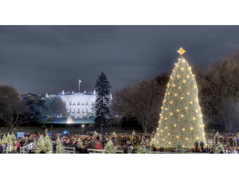 Reese Witherspoon To Host 2015 National Christmas Tree Lighting