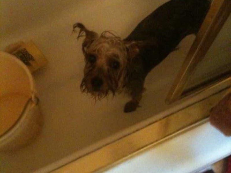 Drive-Thru Doggie Wash Denied (For Now) | Shelton, CT Patch