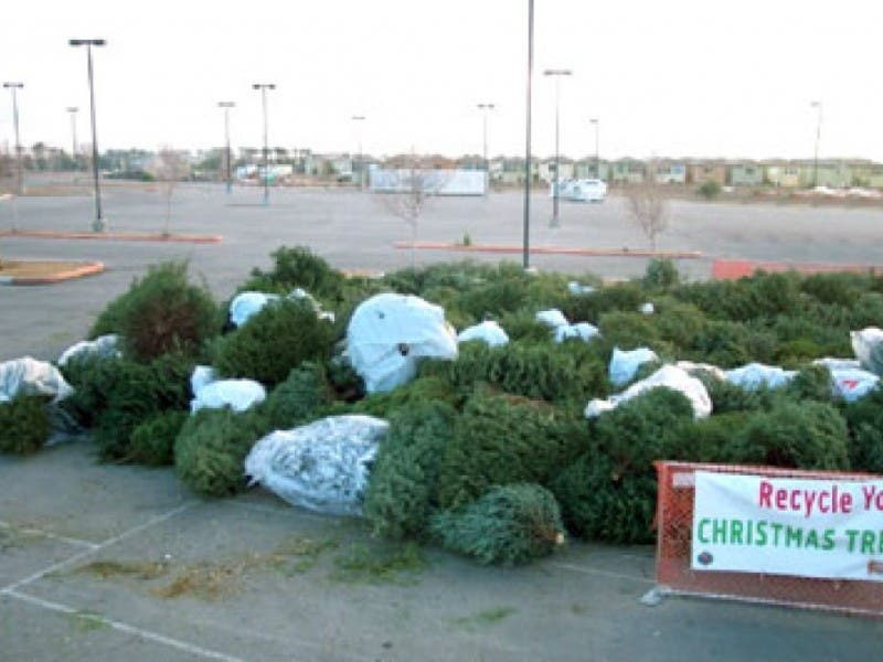 Culver City Offers Free Christmas Tree Recycling
