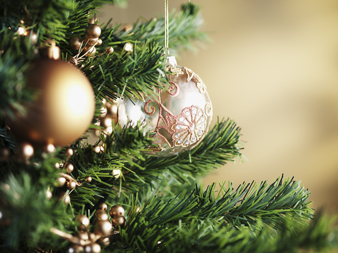 Where to Cut Your Own Christmas Tree in