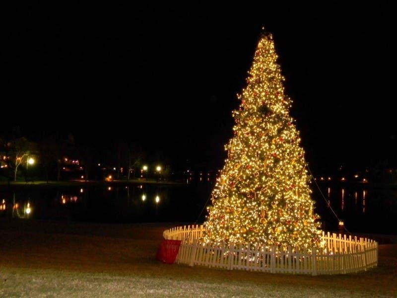 Don't Burn, but Recycle, Your Christmas Tree. CC&R and Waste Management ... - Don't Burn, But Recycle, Your Christmas Tree Rancho Santa