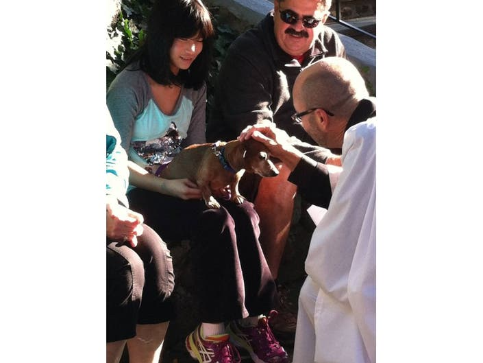 Blessing of the Animals October 4th, 4 pm | Farmington, CT Patch