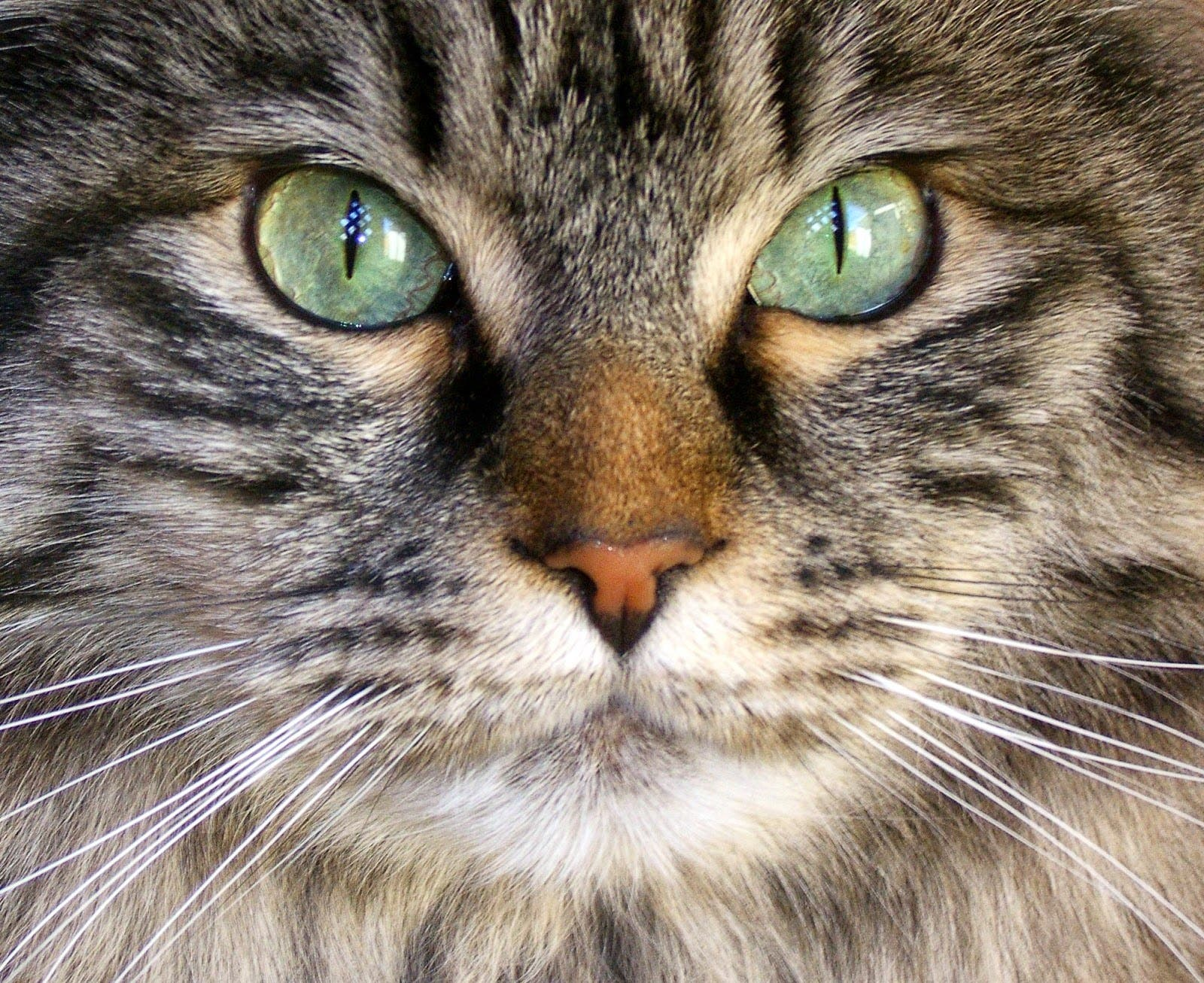Can Your Cat S Eyes Change Color Morristown Nj Patch