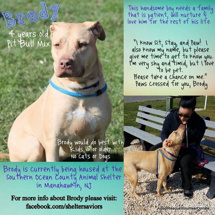 Brody Needs A Home! | Barnegat, NJ Patch