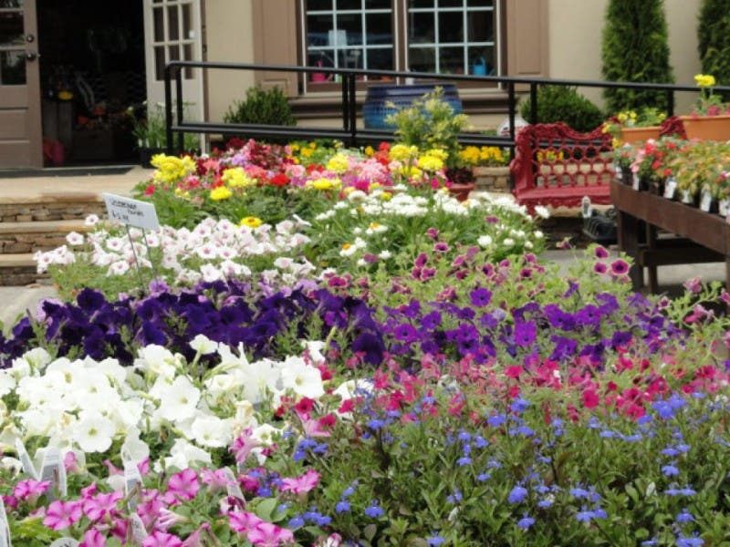 ... Hastings Garden Center Opens In Peachtree Corners 0 ...