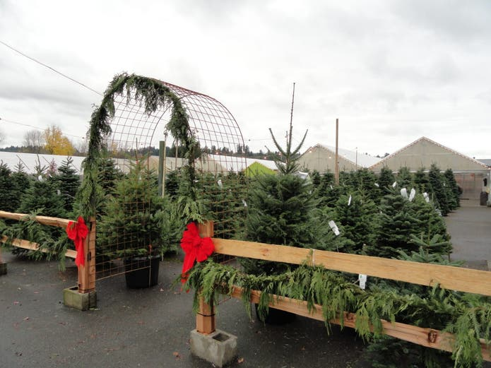 Where to Buy (or Rent) Christmas Trees (Cut, Living or ...