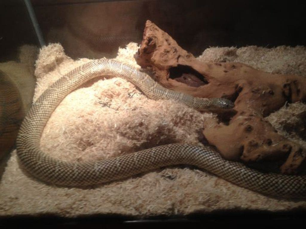 Best of the Craigslist: A 'Thick and Heavy Snake' Needs a Home, and