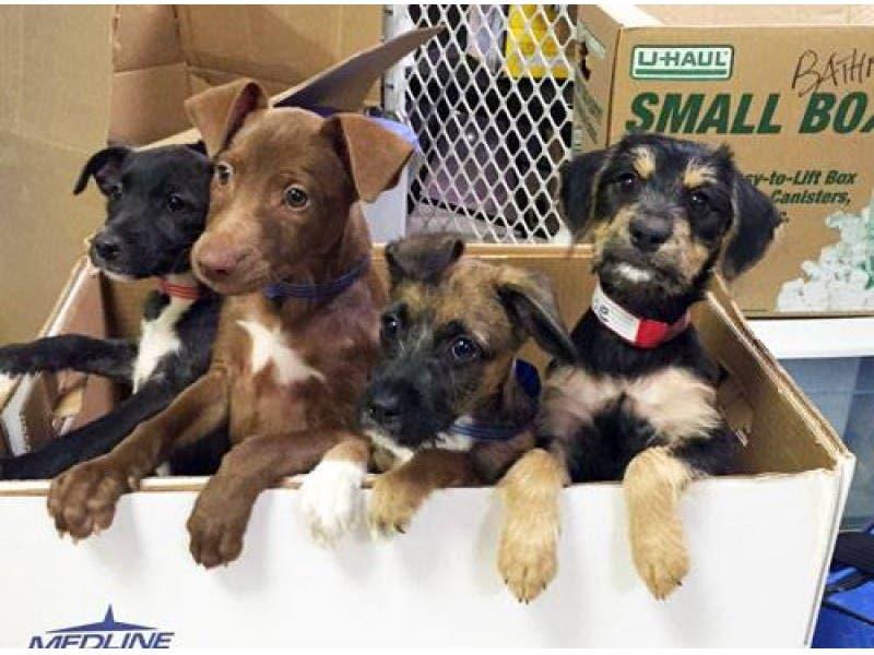 save a dog sudbury ma