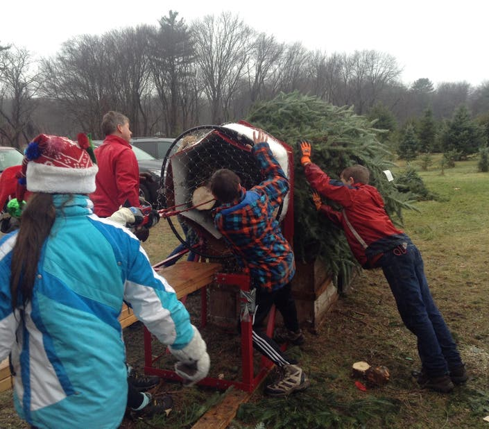 The Real Christmas Tree Farm: Get Your Christmas Tree Near (and In) Marlborough