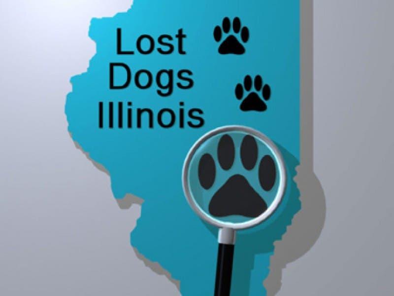 lost dog illinois