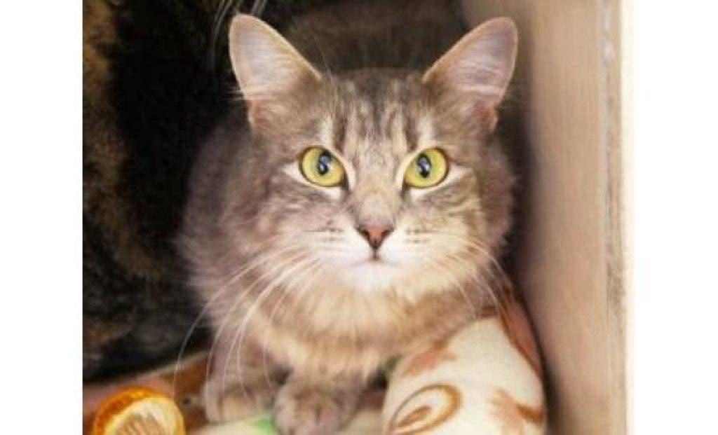 Adopt this Pet: Savannah Loves Sweet Talk and Head Rubs | Bellevue