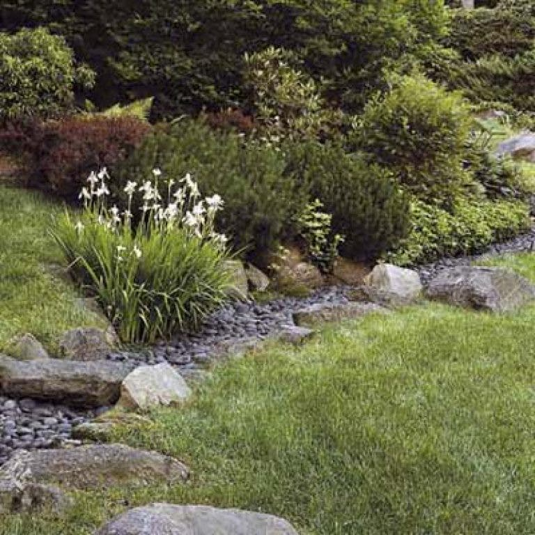 Gardening Solutions To Soggy Back Yards And Fun Ideas For Planting