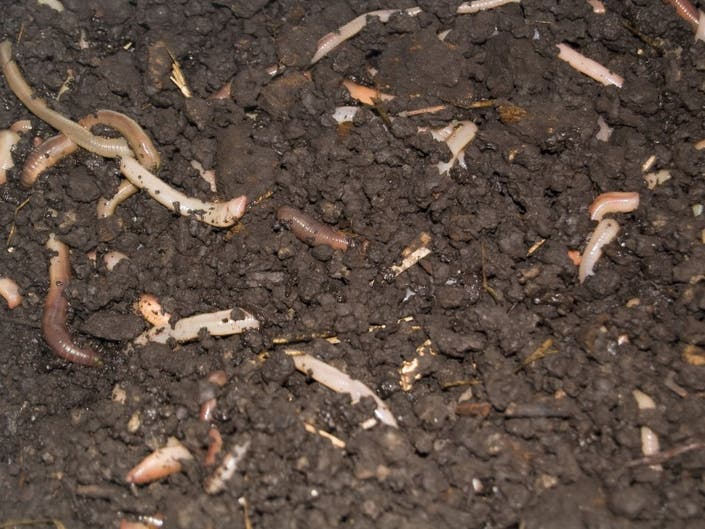 Worms Really Get a Bad Rap | Lakewood, WA Patch
