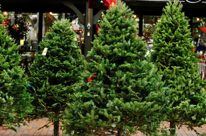 Where To Buy A Christmas Tree This Holiday Season