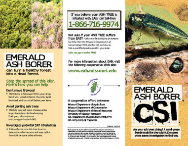 State Wide Quarantine Hopes To Prevent Spread Of Emerald