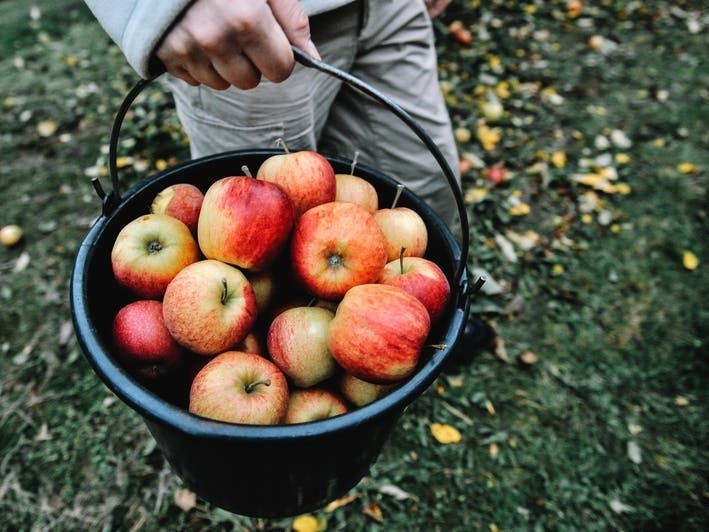 Where To Pick Your Own Apples, Pumpkins Near Morris County 2020