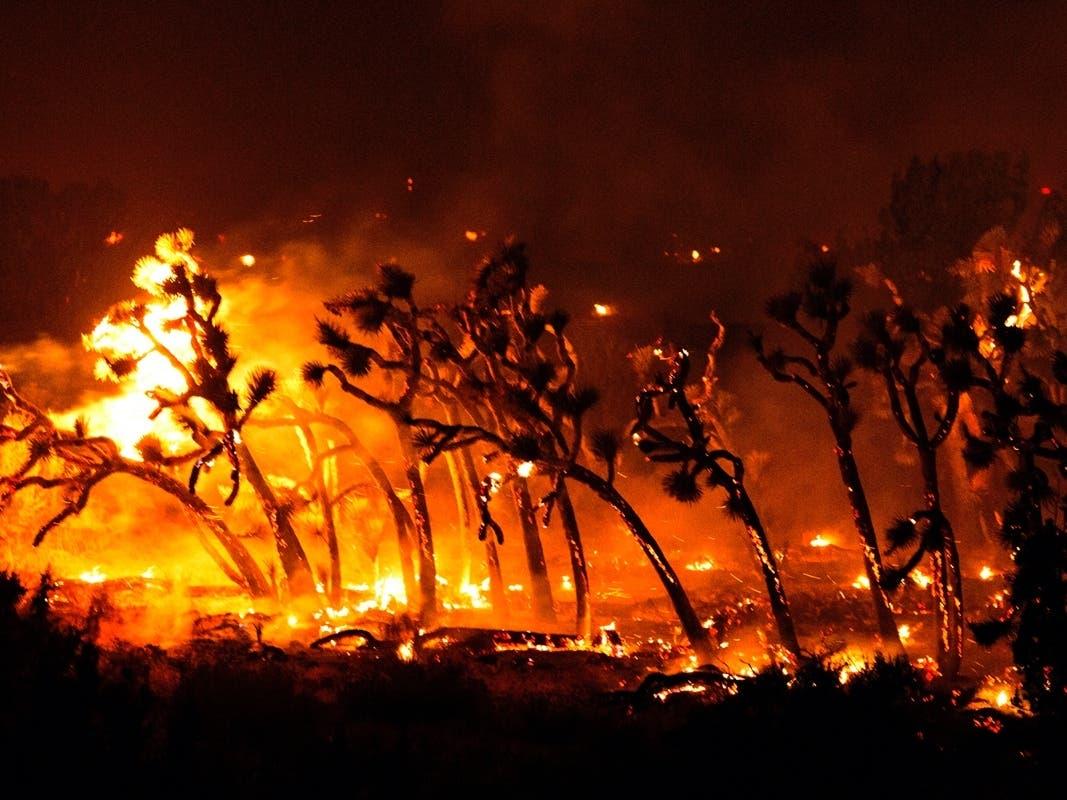 5M Acres Burn In West Coast Fires; Firefighter Dies In CA