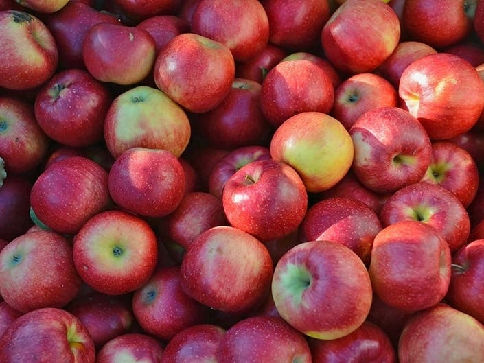 Apple Picking Guide 2019 In The Hudson Valley