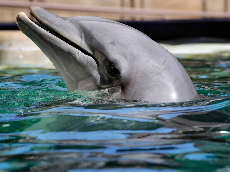 Dolphins Trade Arizona Desert For Troubled Waters, Activists Say