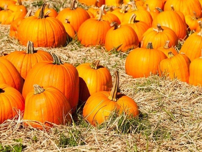 Best Kansas City-Area Pumpkin Patches 2020