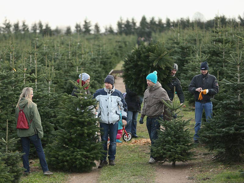 Where To Buy Live Christmas Trees In North Fulton