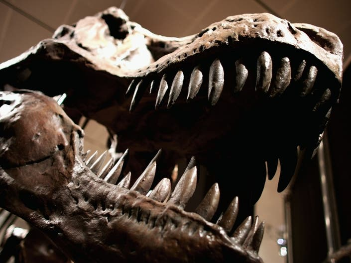 Adult Sleepovers Return To American Museum Of Natural History