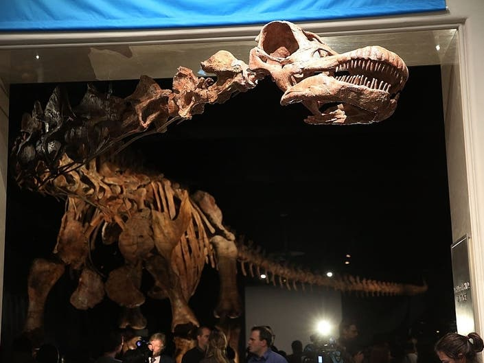 WATCH: Natural History Museums Titanosaur Gets Cleaning