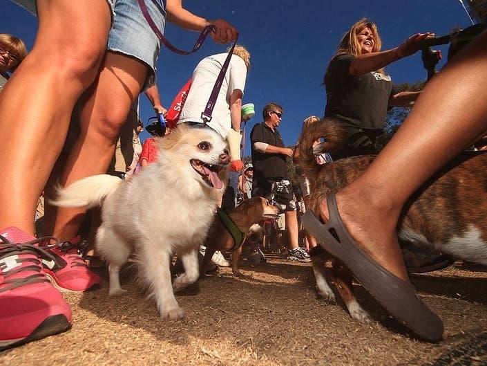 Strut Your Mutt: Pet Shelter Fundraiser Returns To Hells Kitchen