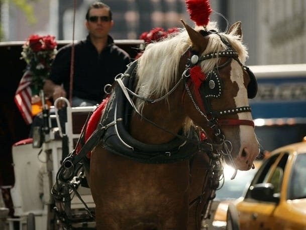 Carriage Industry Banned From Working Horses In 90 Degree Heat