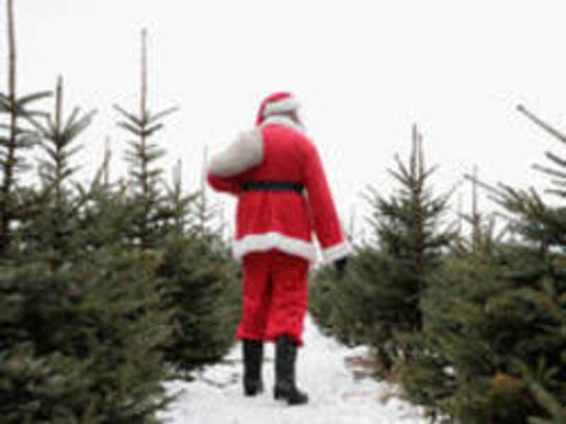 cut your own christmas tree near bridgewater for 2017 - Cut Your Own Christmas Tree