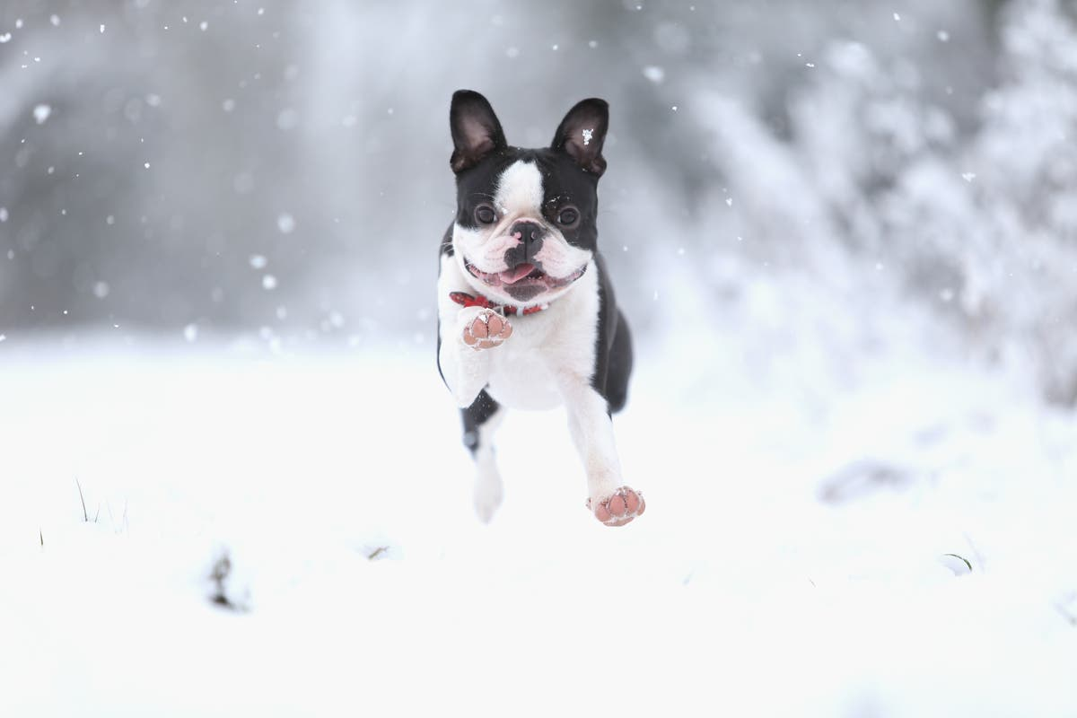 Most Popular Dog Names In Minneapolis: List   Southwest Minneapolis