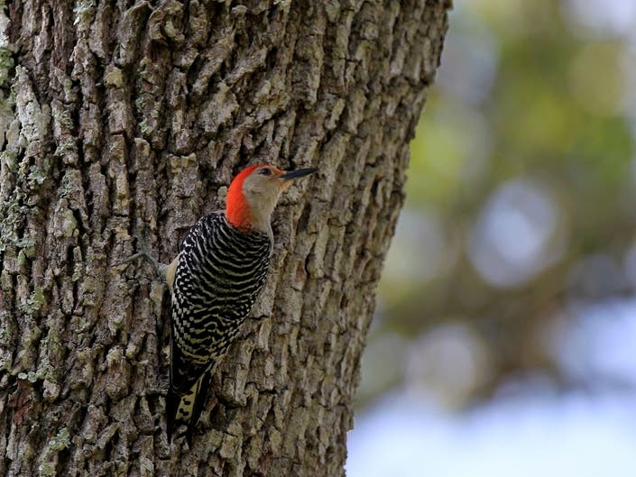 87 Birds In MA Vulnerable To Climate Change: Audubon