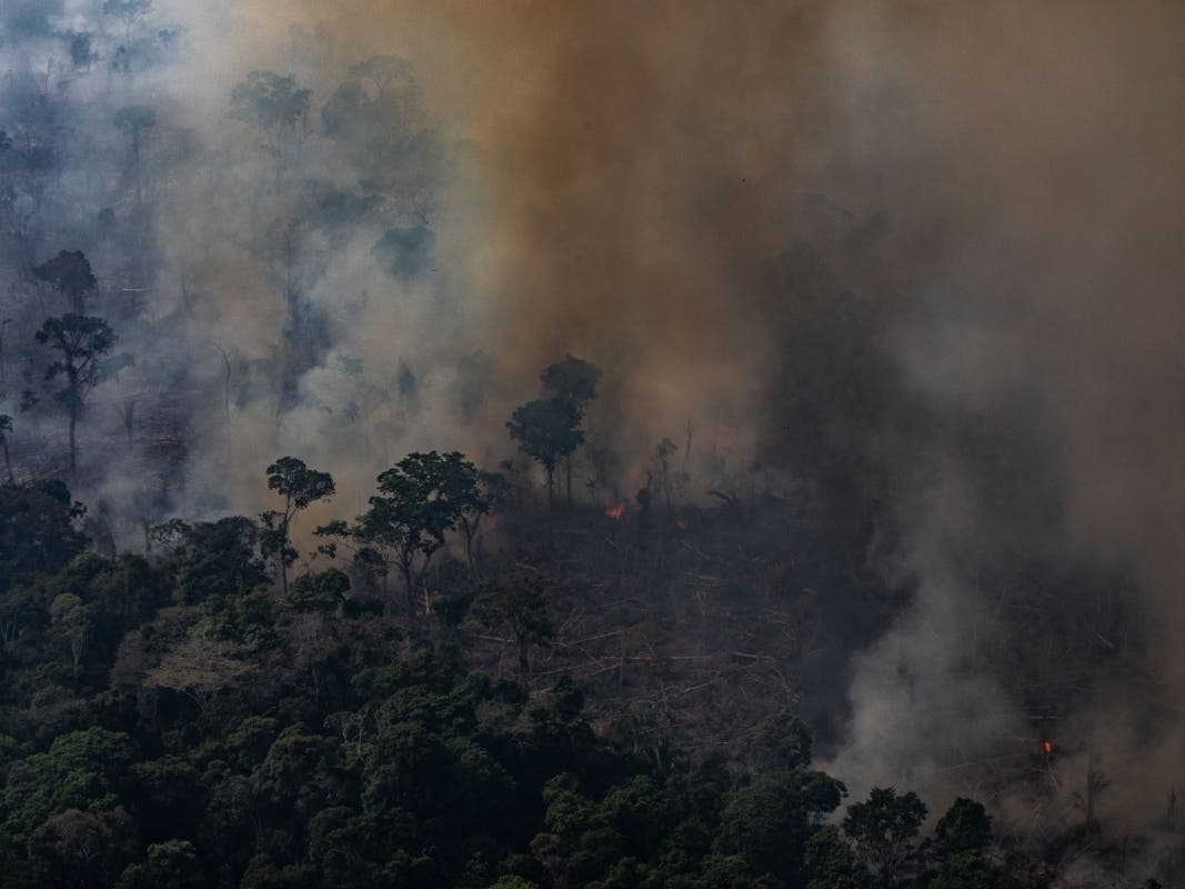 LA Stops Buying Products Tied To Deforestation