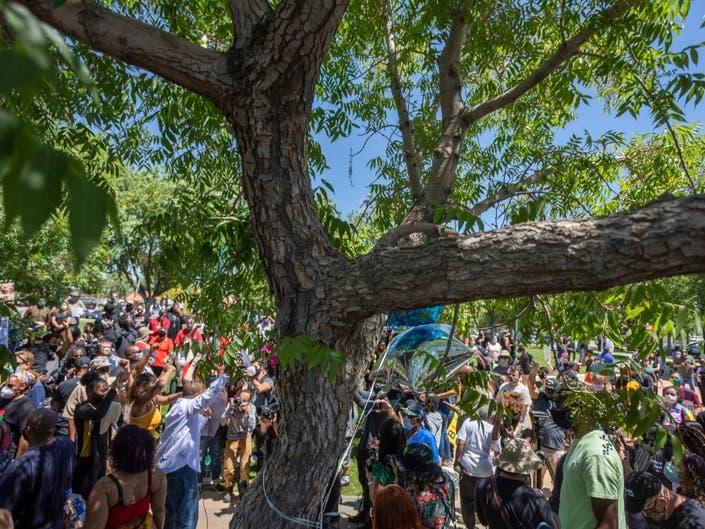 USA-Nouveau scandale: des Afro-américains retrouvés pendus à des arbres, leurs familles réagissent!