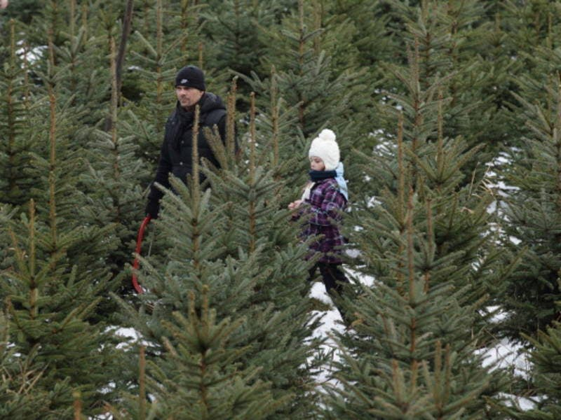 Where To Buy Live Christmas Trees In Anne Arundel County