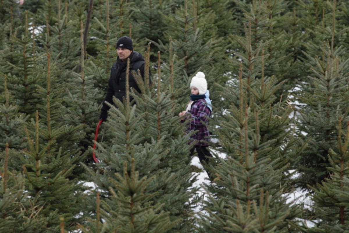 Christmas Forest.Where To Buy Live Christmas Trees In Anne Arundel County
