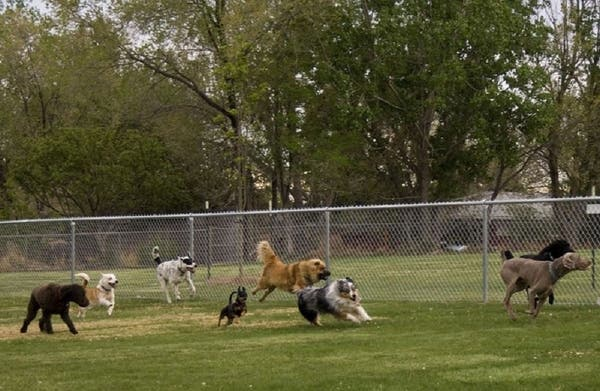 Edison And Metuchen To Open Dog Park On Wednesday Woodbridge Nj Patch